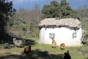 Las gallinas y su casa