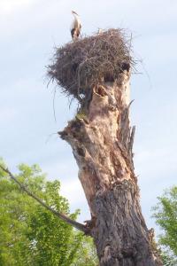 Un nido de Cigüeñas